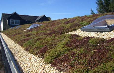 Green Roofing - Permaroof Portsmouth