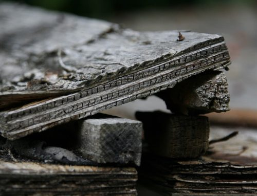 How to Tell if You Have a Rotting Roof